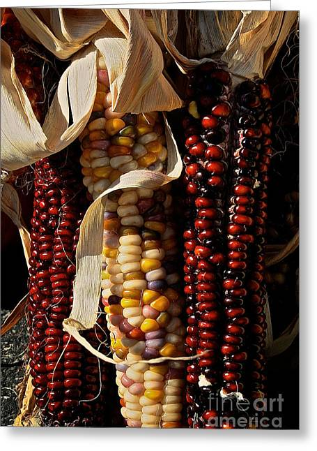 Minnesota Grown Photographs Greeting Cards - Indian Corn Greeting Card by Susan Herber
