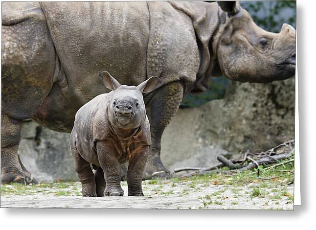 One Horned Rhino Greeting Cards - Indian Rhinoceros Rhinoceros Unicornis Greeting Card by Konrad Wothe