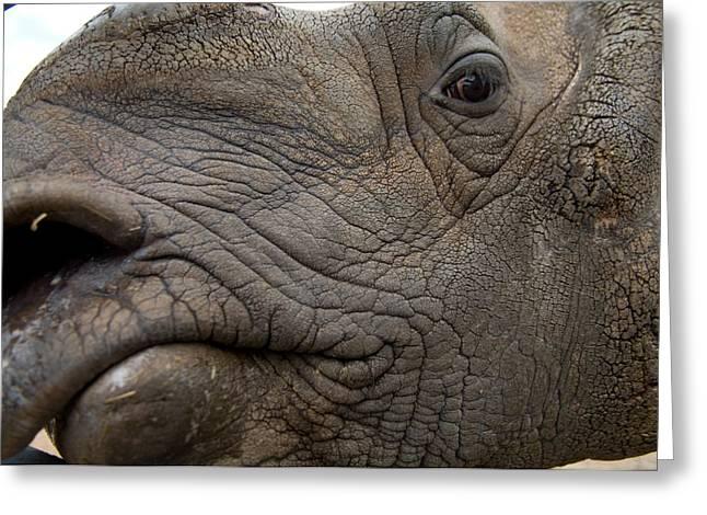 Indian Rhinoceros Greeting Cards - Indian Rhinoceros Rhinocerus Unicornis Greeting Card by Joel Sartore