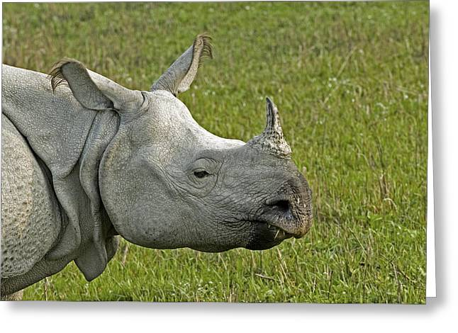 One Horned Rhino Greeting Cards - Indian Rhinoceros Greeting Card by Tony Camacho