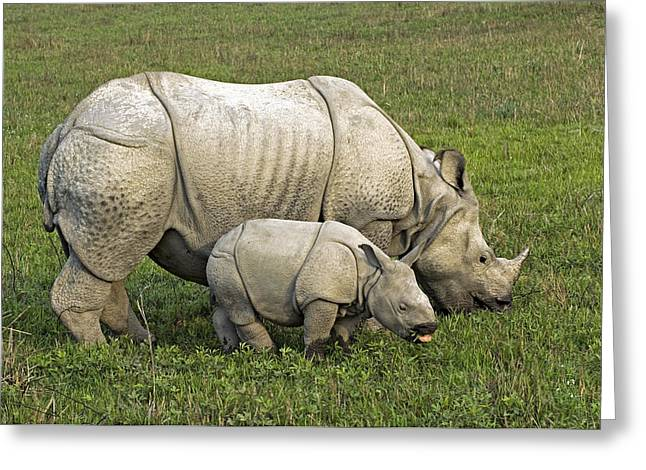 One Horned Rhino Greeting Cards - Indian Rhinoceroses Greeting Card by Tony Camacho