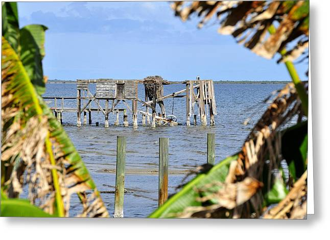 Nautical Birds Greeting Cards - Indian River Roost Greeting Card by David Lee Thompson