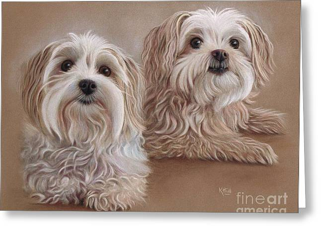 Maltese Drawings Greeting Cards - Indra and Guy Greeting Card by Karen Hull