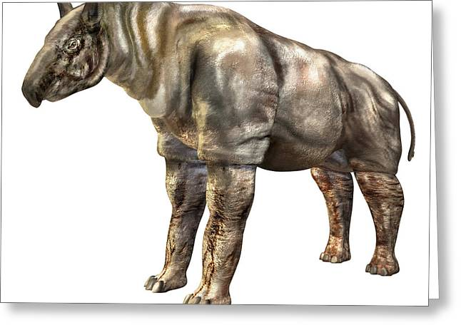 Rhinoceros Greeting Cards - Indricotherium Greeting Card by Roger Harris