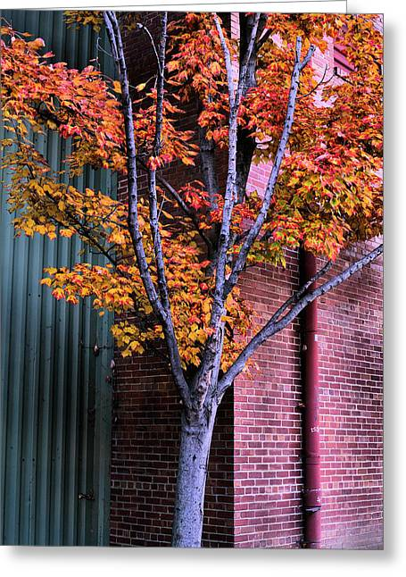 Alexandria Virginia Greeting Cards - Industrial Greeting Card by JC Findley