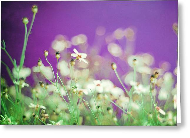 Wildflower Photos Greeting Cards - Infatuation in Purple Greeting Card by Amy Tyler