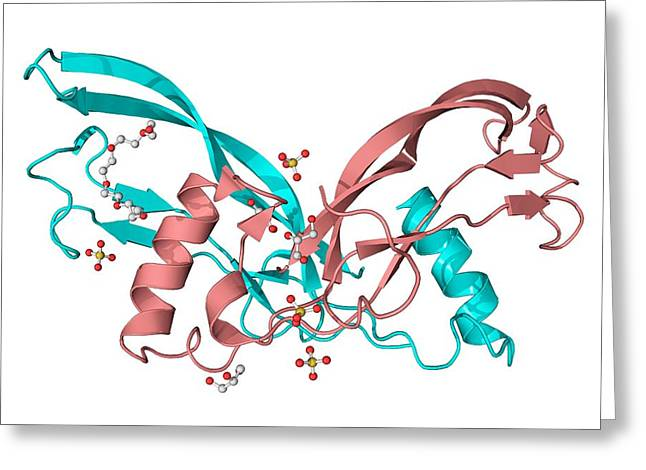 Inhibin Beta A Molecule Greeting Card by Laguna Design
