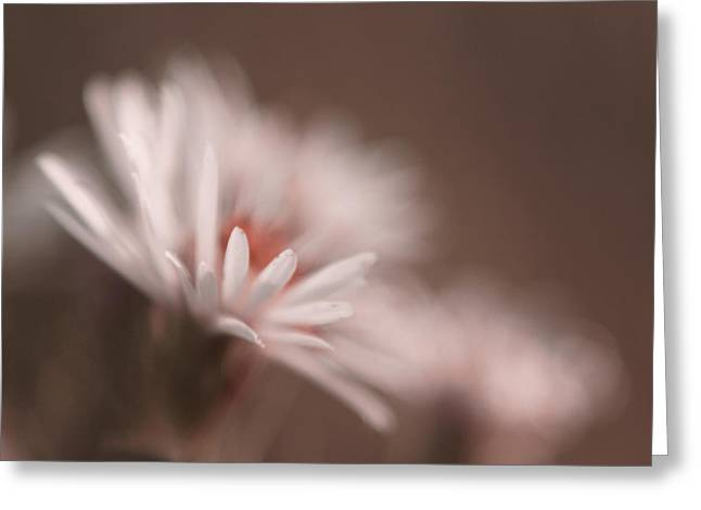 Floral Photography Greeting Cards - Innocence - 05-01a Greeting Card by Variance Collections