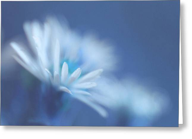 Daisy Greeting Cards - Innocence 11 Greeting Card by Variance Collections