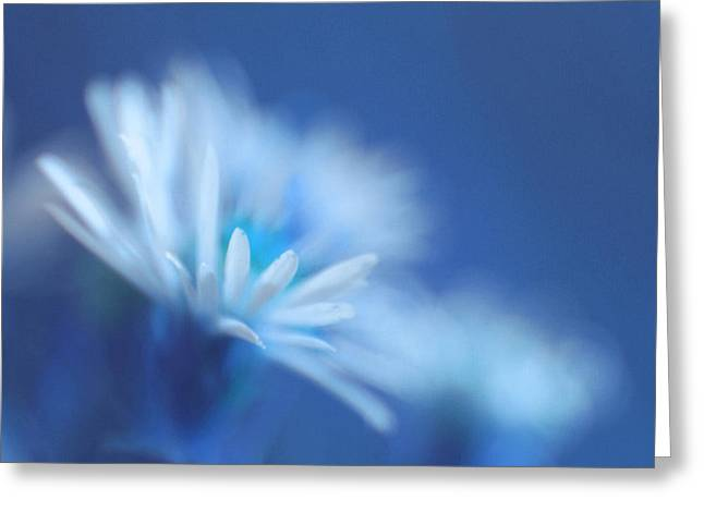 Blue Flowers Greeting Cards - Innocence 11b Greeting Card by Variance Collections