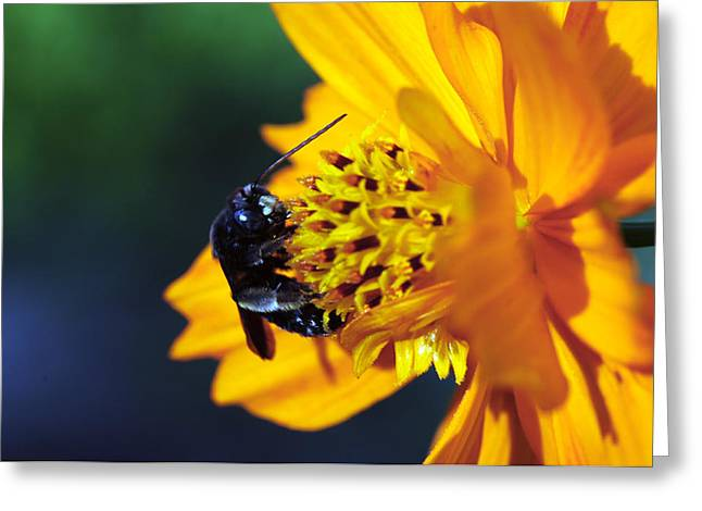 Insect And The Wild One Greeting Card by Wanda Brandon