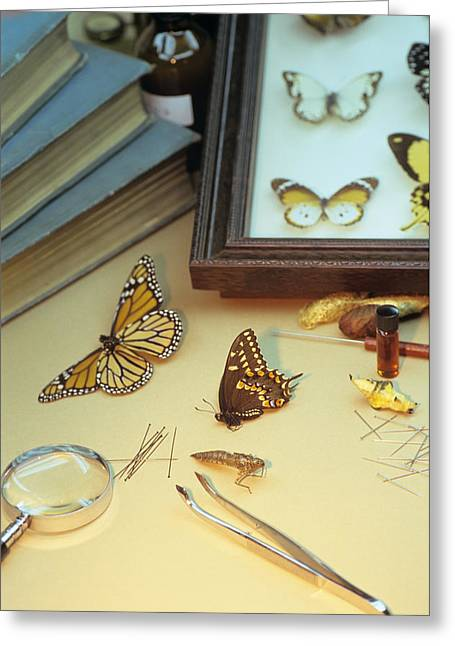 Mounting Greeting Cards - Insect Collectors Equipment Greeting Card by David Aubrey