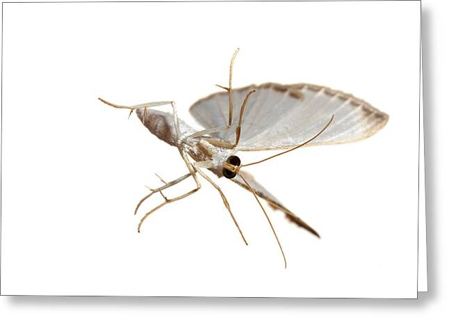 Reserve Greeting Cards - Insect Of The Order Lepidoptera Greeting Card by David  Liittschwager