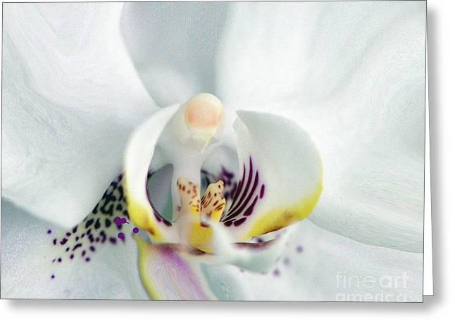 Inside Job.... Greeting Card by Tanya Tanski