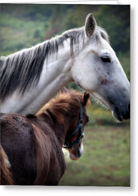 Animals Love Greeting Cards - INSTINCT of LOVE Greeting Card by Karen Wiles