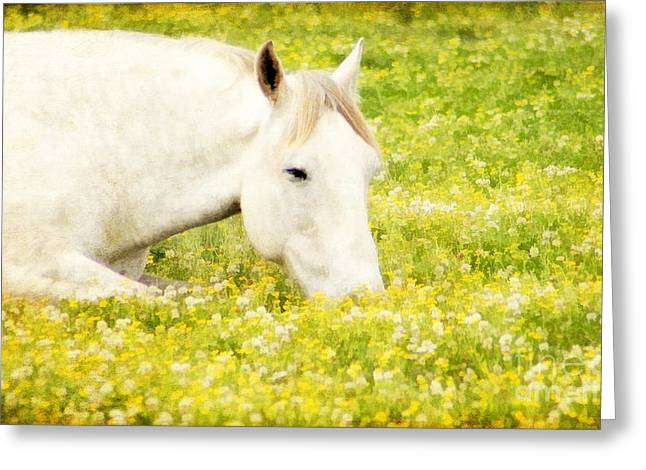 Kentucky Horse Park Photographs Greeting Cards - Intermission Greeting Card by Darren Fisher