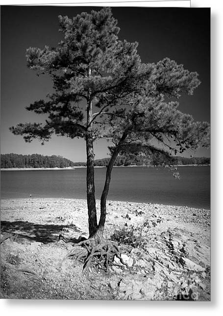 Tree Roots Greeting Cards - Intertwined Greeting Card by M J Glisson