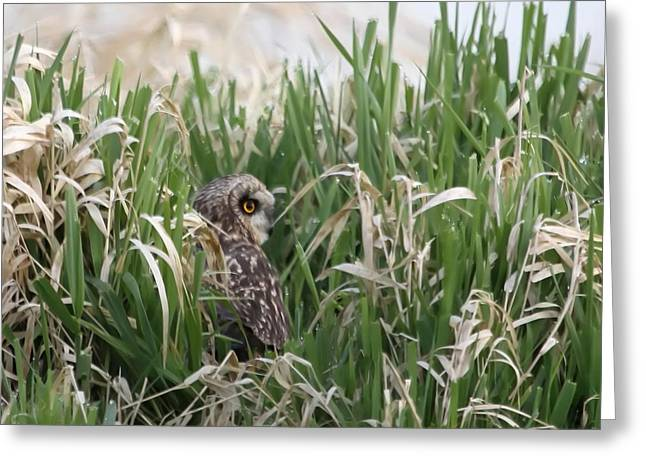 Wildlife Refuge. Greeting Cards - Into the Grasses Greeting Card by Angie Vogel