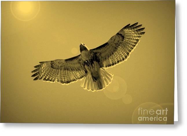 Hawk Greeting Cards - Into the Light - Sepia Greeting Card by Carol Groenen