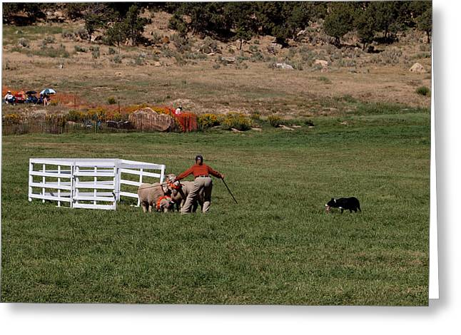 Into the Paddock Greeting Card by Joshua House