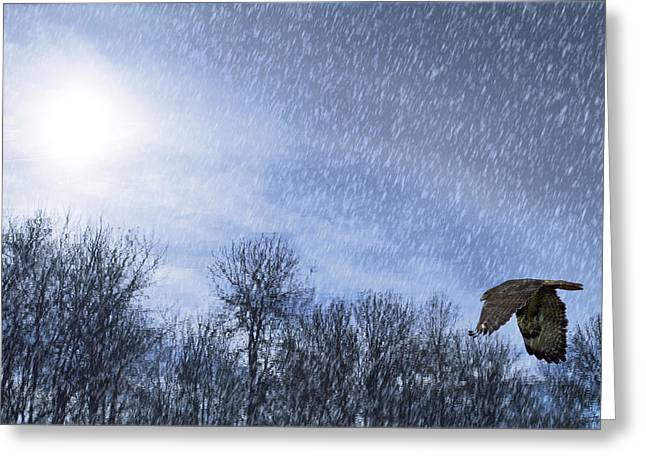 Flying Bird Greeting Cards - Into the Storm Greeting Card by Rebecca Cozart