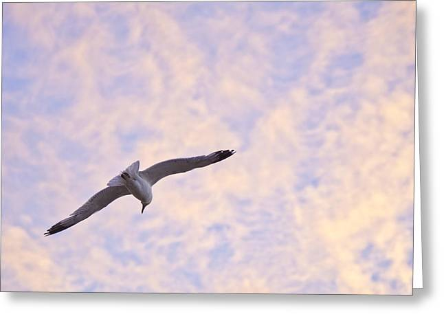 Into The Wind Greeting Card by Priya Ghose