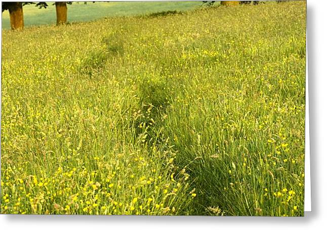 Ireland Trail Through Buttercup Meadow Greeting Card by Peter McCabe