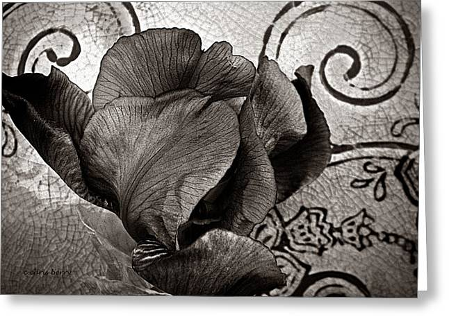 Yearly Greeting Cards - Iris and Crackled Vase Greeting Card by Chris Berry