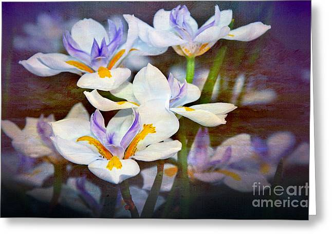 Textured Floral Greeting Cards - Iris Art Greeting Card by Kaye Menner