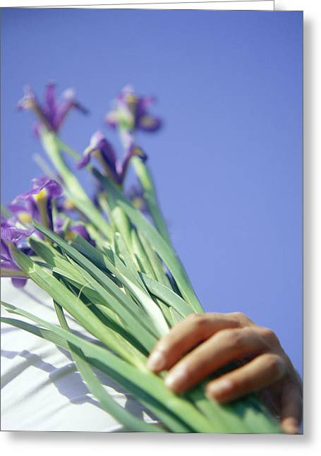 Iris Germanica Greeting Cards - Iris Flowers Held In A Bunch Greeting Card by Cristina Pedrazzini