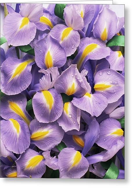 Dewdrops Greeting Cards - Iris Flowers (iris Sp.) Greeting Card by Erika Craddock