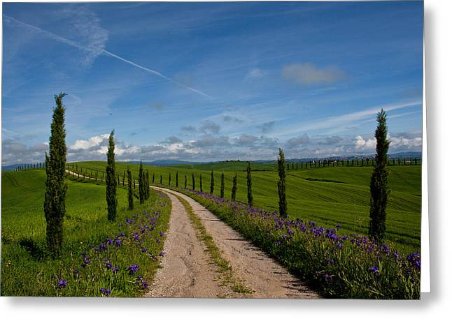 Tuscan Traditions Greeting Cards - Iris Grow Amid New Cypress Growth Greeting Card by Kenneth Ginn