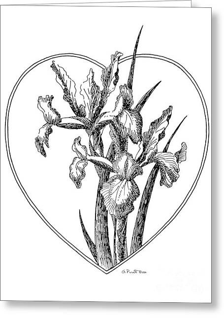 Calla Lily Drawings Greeting Cards - Iris Heart Drawing 3 Greeting Card by Gordon Punt