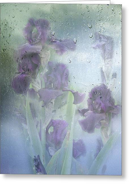 Diane Schuster Greeting Cards - Iris In The Spring Rain Greeting Card by Diane Schuster