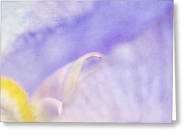 Soft Light Greeting Cards - Iris Study 3 Greeting Card by Bonnie Bruno
