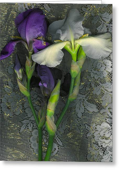Visionary Artist Digital Art Greeting Cards - Irises with Lace Greeting Card by George  Page