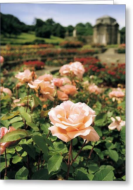 Garden Statuary Greeting Cards - Irish National War Memorial Gardens Greeting Card by The Irish Image Collection