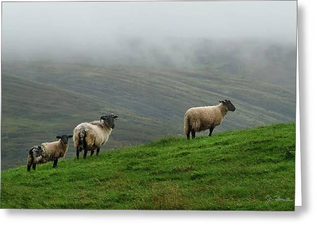 Ovine Greeting Cards - Irish Sheep in the Mist Greeting Card by Joe Bonita