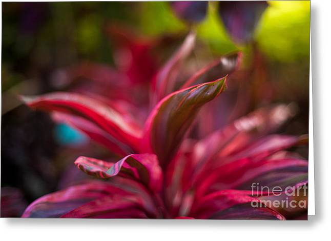 Island Bromeliad Greeting Card by Mike Reid