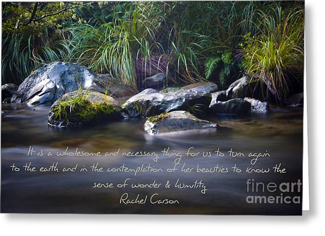 Rachel Carson Greeting Cards - It is a Wholesome....... Greeting Card by Karen Lewis