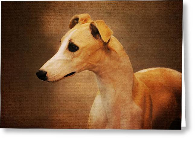 Greyhound Photographs Greeting Cards - Italian Greyhound Greeting Card by Jai Johnson