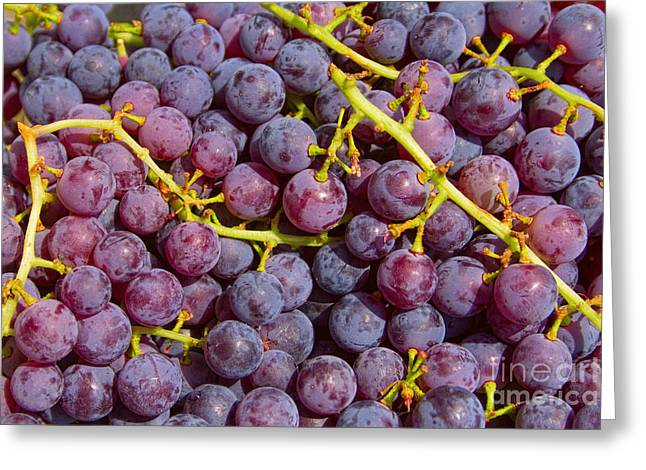 Italian Market Greeting Cards - Italian Red Grape Bunch Greeting Card by James BO  Insogna