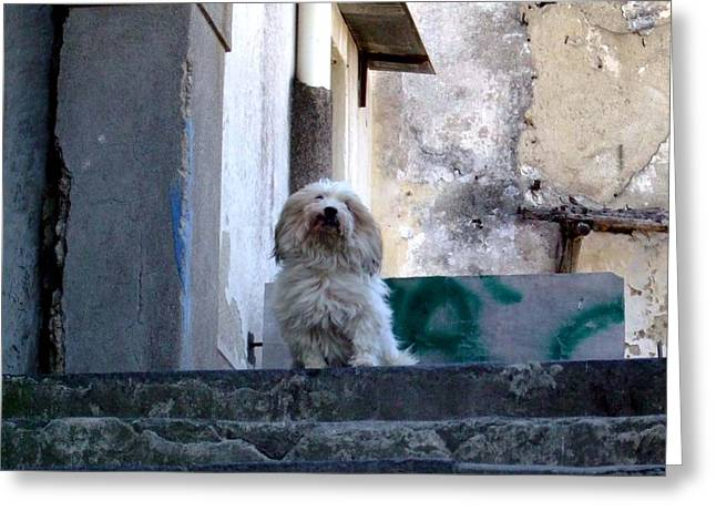 Stepping Stones Greeting Cards - Italys Capri Doggie Greeting Card by Mindy Newman