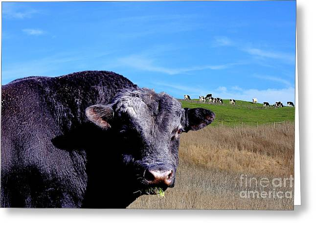 Its A Bulls Life Greeting Card by Wingsdomain Art and Photography