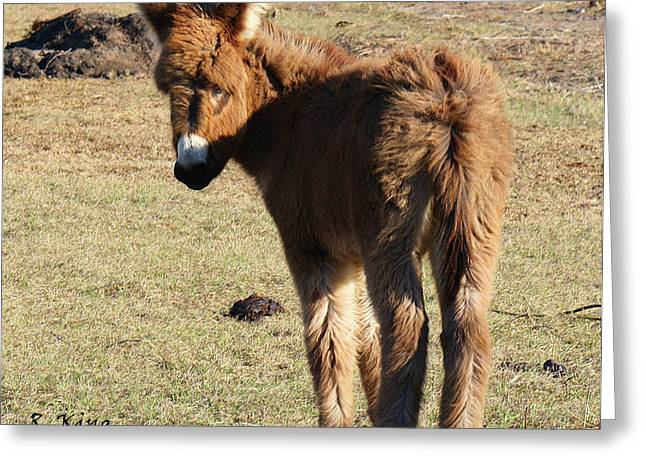 Baby Jackass Greeting Cards - Its a Cow Pasture What Did You Expect Greeting Card by Roena King