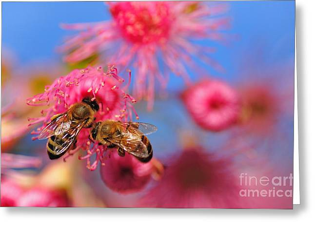 Australian Bees Greeting Cards - Its my turn now... Greeting Card by Kaye Menner