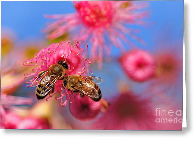 Its My Turn Now... Greeting Card by Kaye Menner