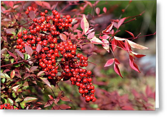Black Berries Greeting Cards - Its the Berries Greeting Card by Linda Phelps