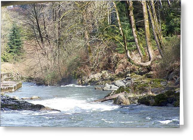 Stream Pyrography Greeting Cards - Its The Water And A Lot Lot More Greeting Card by Laurie Kidd
