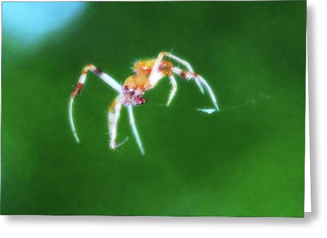Itsy Bitsy Spider Greeting Cards - Itsy Bitsy Spider Greeting Card by Bill Cannon